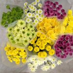 Assorted Local Spray Chrysanthemums